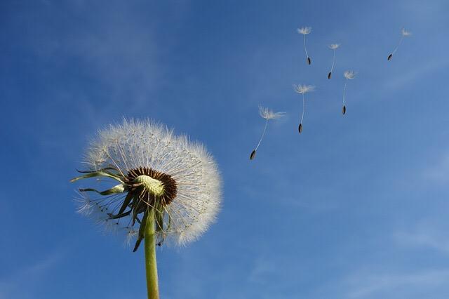 Braucht die Welt ein weiteres Blog? Ja, das Traumjob-Coaching-Blog